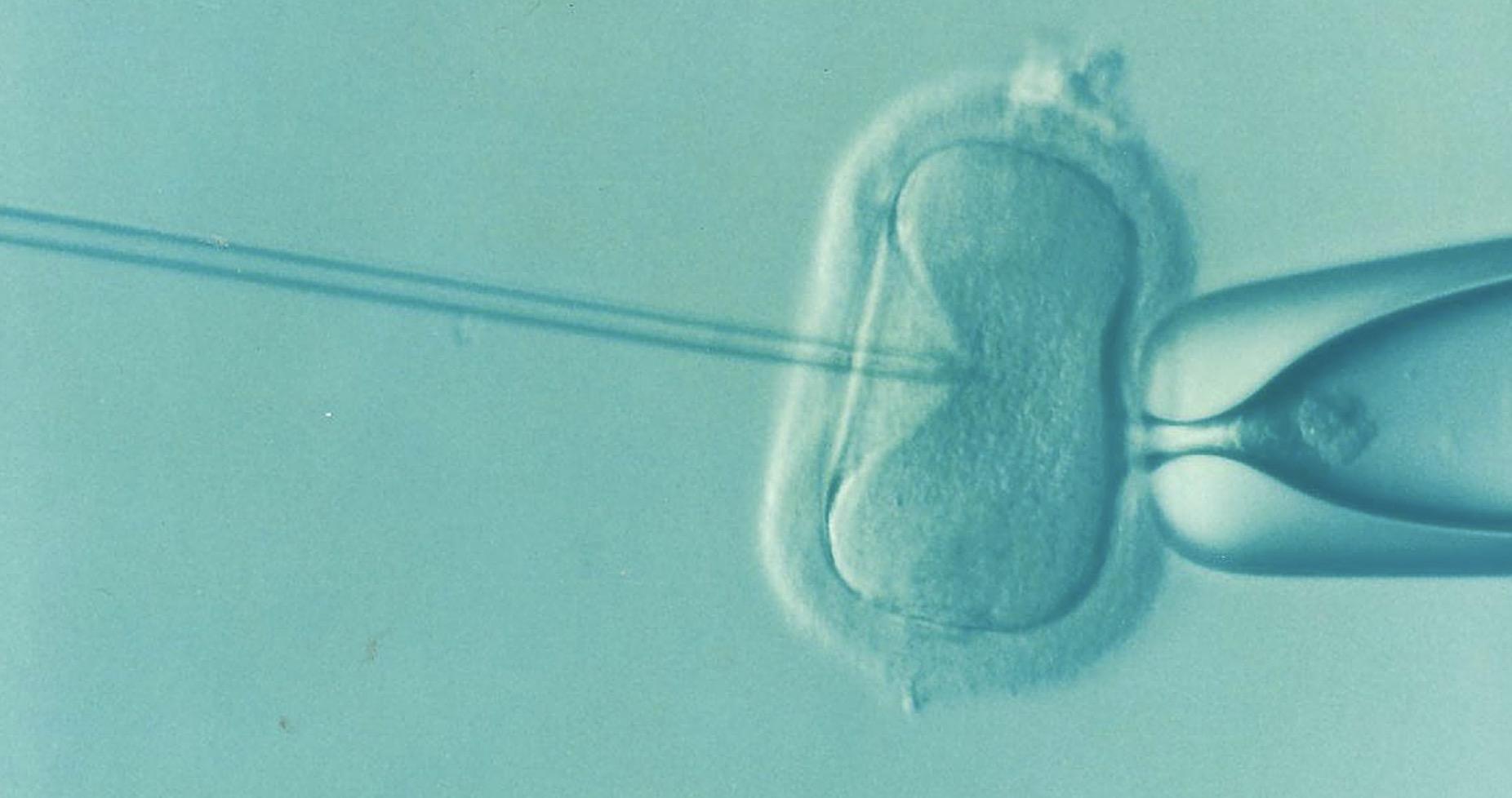 La fertilité